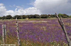 SierraRinconBlogTrip - Campos en la Sierra del Rincón