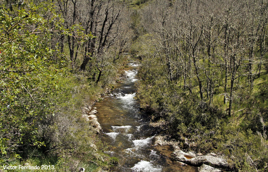 Sierra del Rincón - Hayedo de Montejo