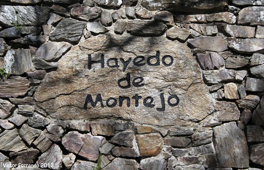 SierraRinconBlogTrip - Hayedo de Montejo