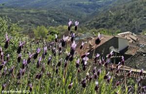 SierraRinconBlogTrip - Paseando por La Hiruela