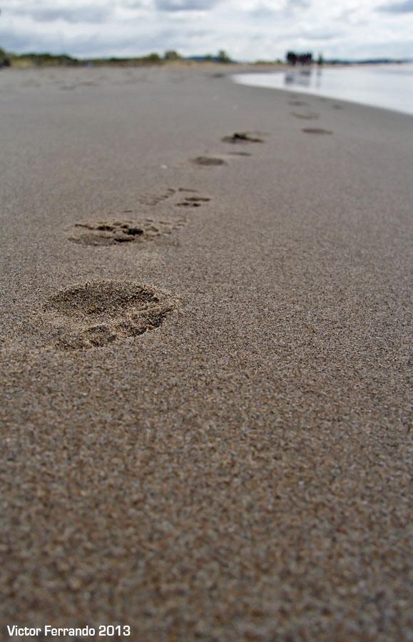 GastroBatalla - TBMCatSur - Playa de Torredembarra