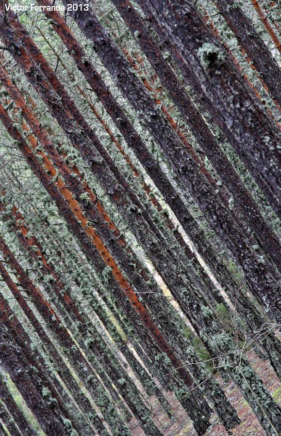 Nacimiento del Rio Cuervo - Cuenca - Arboles