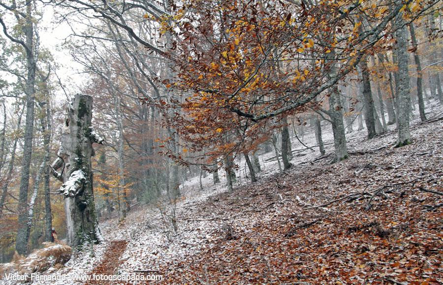 Qué hacer en la Sierra Norte de Madrid