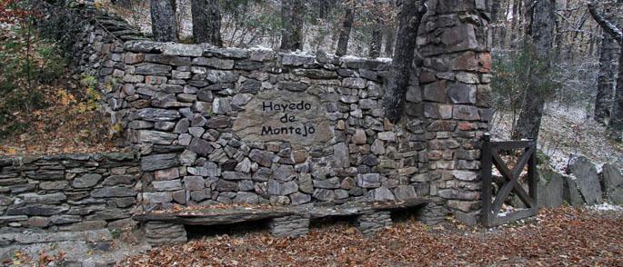 Hayedo de Montejo en Otoño