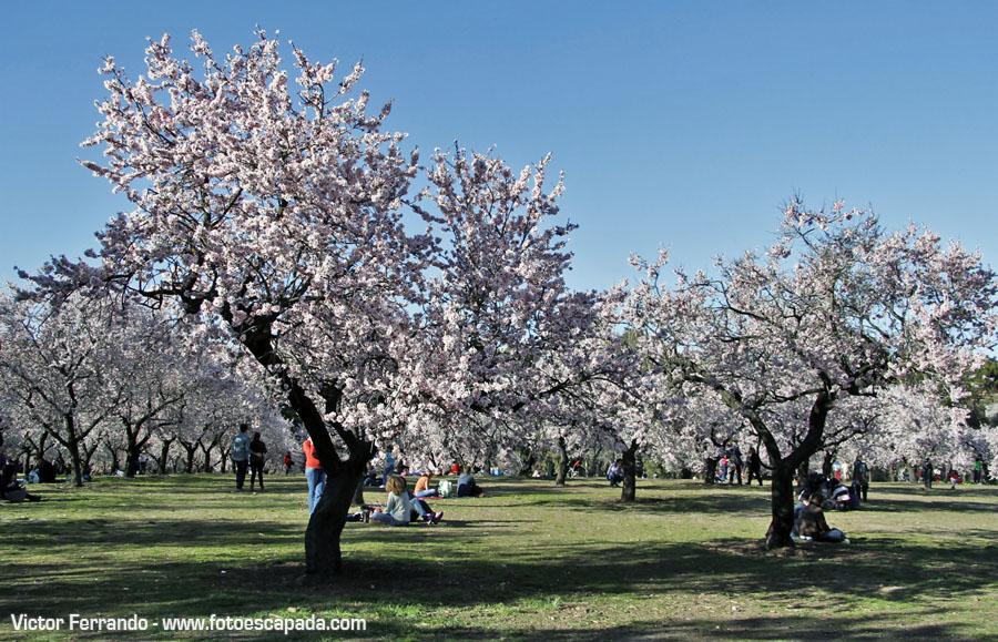 Primavera en Madrid en el Parque de la Quinta de los Molinos
