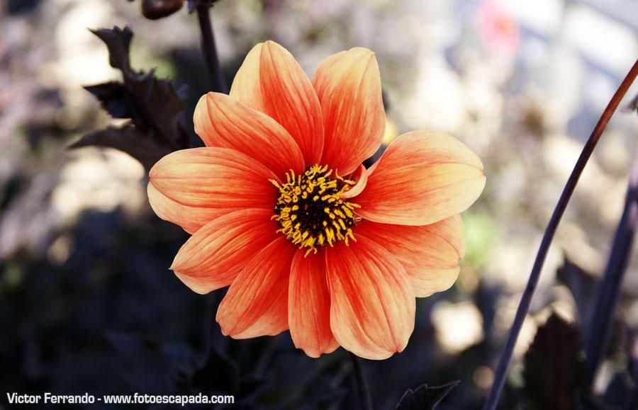 Primavera en Madrid - Dalieda de San Francisco