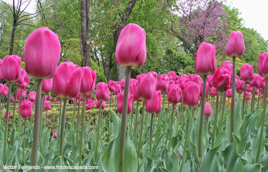 Primavera en Madrid - Jardín Botánico