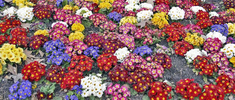 Primavera en madrid 7 parques y jardines donde disfrutarla for Jardines de primavera