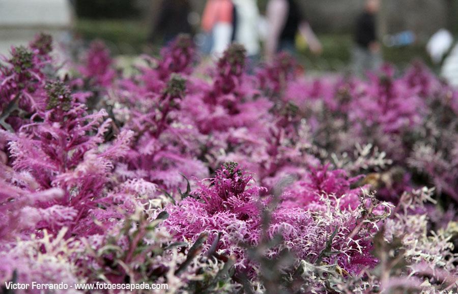 Primavera en Madrid - Parque del Retiro