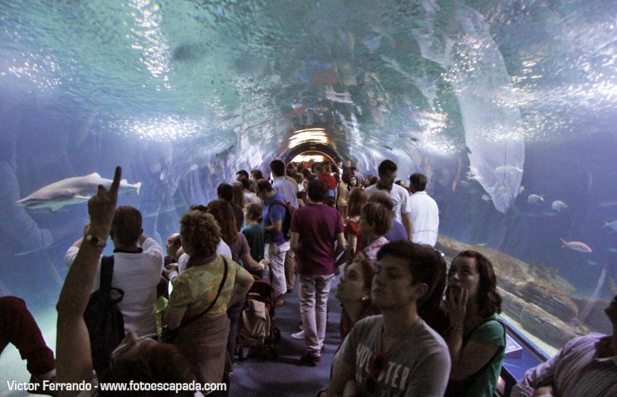 Oceanografic de la Ciudad de las Ciencias de Valencia