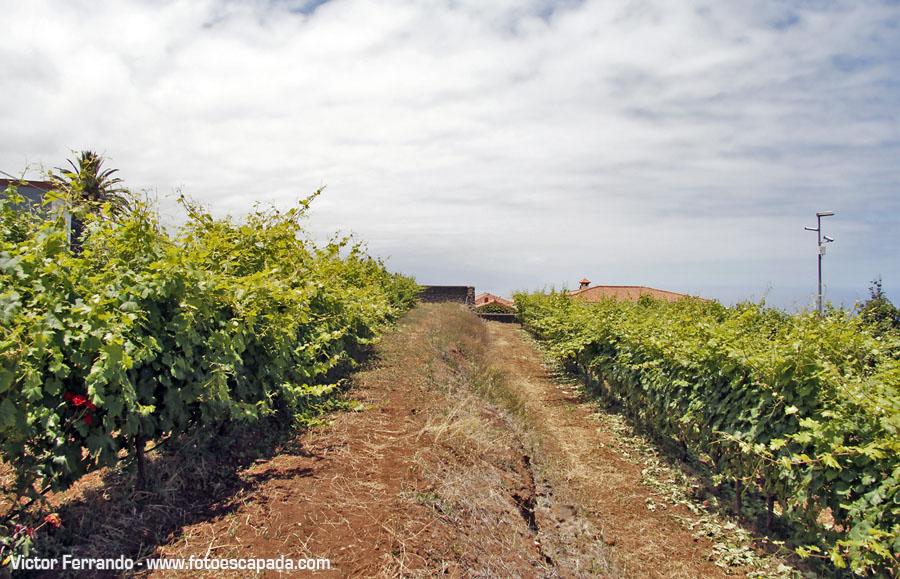 Casa del Vino La Baranda Tenerife 2