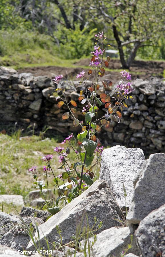 Horcajuelo de la Sierra en primavera