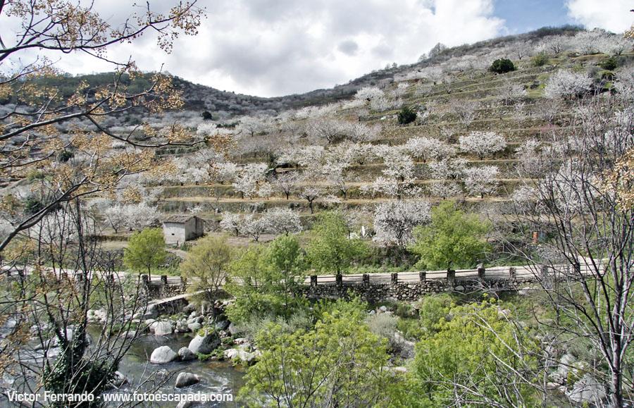 Cerezos en flor en el Valle del Jerte 25