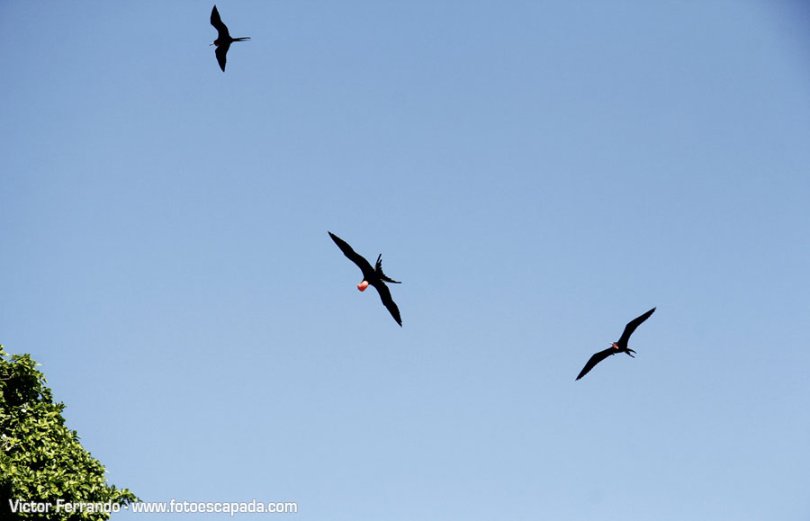 El Cayo de los Pájaros