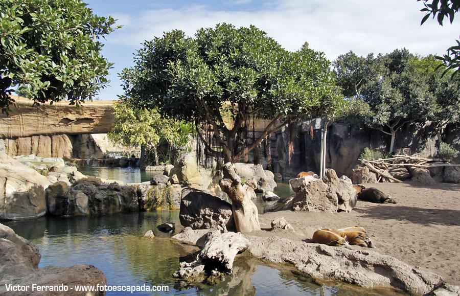 El Bosque Ecuatorial en Bioparc Valencia