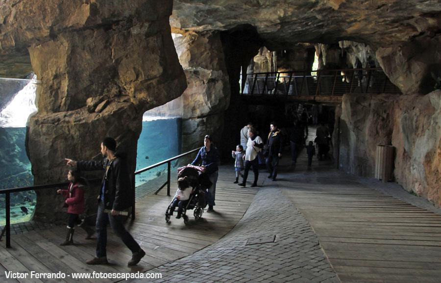 La Cueva de Kitum en Bioparc Valencia