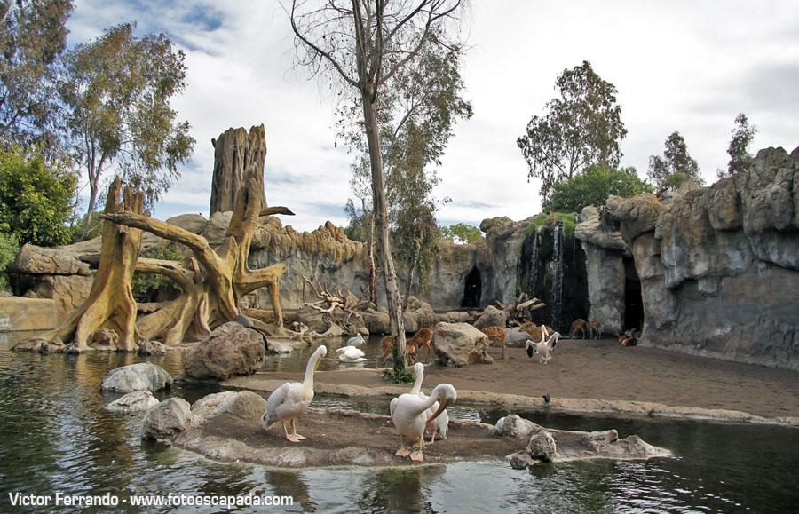 Motivos para visitar Valencia: Bioparc Valencia