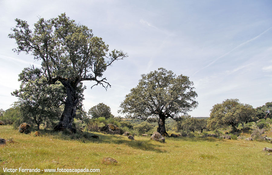 Safari fotografico por el Valle del Ambroz