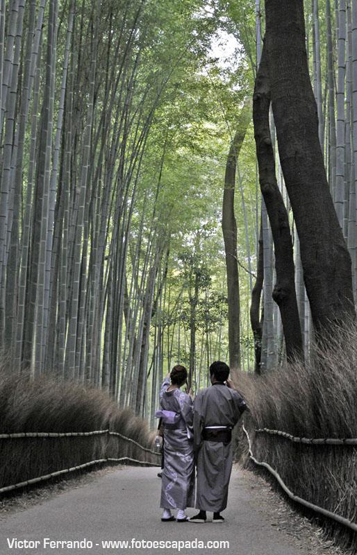 Bosque de Bambu Sagano Arashiyama