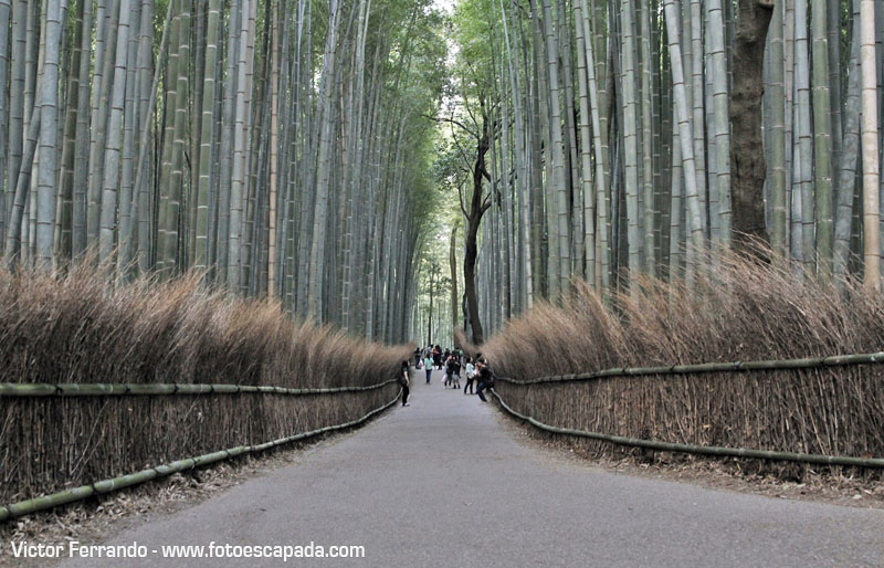Bosque de Bambú Sagano de Arashiyama