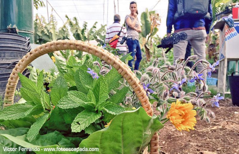 Agricultura Ecologica La Palma