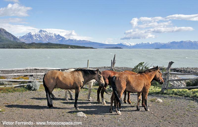 Estancia Helsingfors Patagonia Argentina