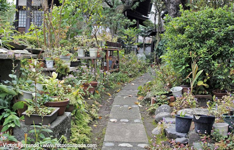 Jardín de un templo cerca de Kamakura