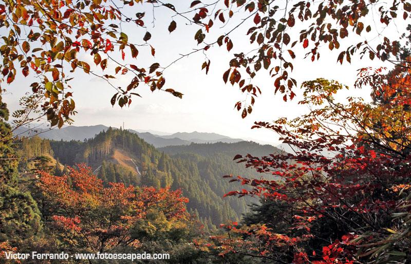 Visita Koyasan Japón