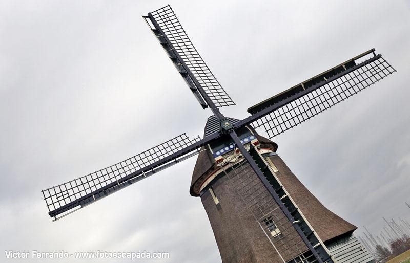Imposible no enamorarse de estos molinos holandeses