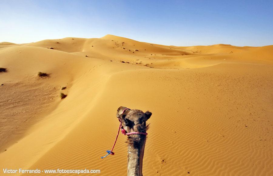 Ruta al Desierto del Sahara desde Marrakech tour de 3 días